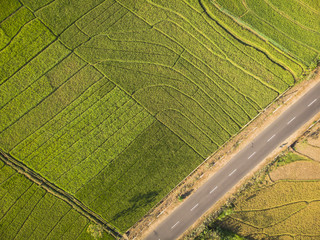 Green rice field aerial top view; Yogyakarta, Indonesia - 15 July 2018