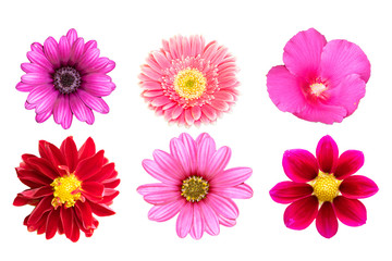 Photo sur Toile Dahlia collection pink flower isolated on white background