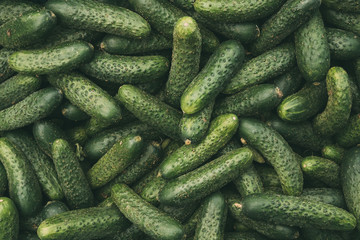 Organic Green Cucumbers On Local Agricultural Vegetable Market.