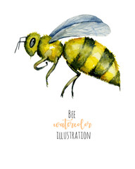 Watercolor bee illustration, hand painted isolated on a white background