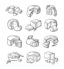 set of different cheese Vector illustration collection