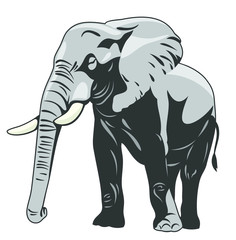 The image of a walking elephant in full growth