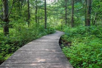 Beautiful wood path in the deep green woods in Minnesota
