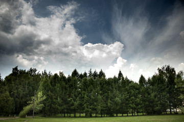 Spring green landscape with blue sky and couds. spruce or fir forest and green grass.