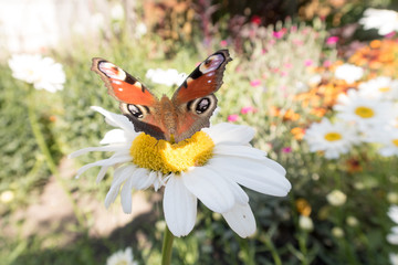 bright colorful butterfly resting on a flower