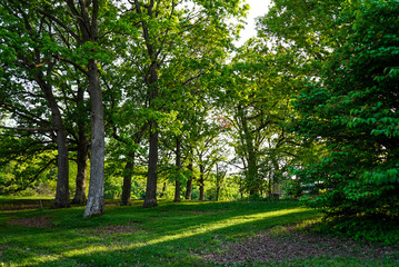 Scenic Springtime Landscape of Green Woodland and Green Grass with Sunlight Shining Through Trees