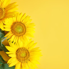 Fototapete - Beautiful sunflowers on yellow background.View from above. Background with copy space.