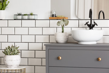 Plant on table next to grey cabinet with washbasin in simple modern bathroom interior. Real photo