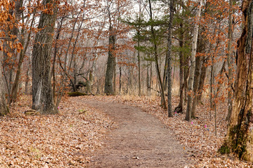 Beautiful Landscape Scene of a Walking Trail in the Woods in Autumn