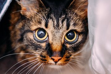 beautiful young cat with big frightened eyes looking at camera
