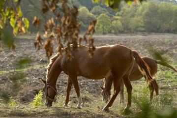 family horses eating grass