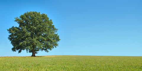 Freistehender Baum auf weiter Wiese vor blauem Himmel