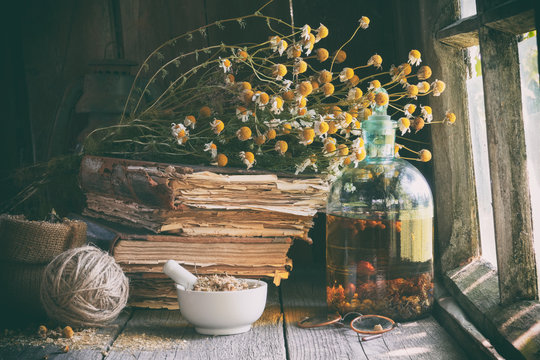 Mortar of dried healing herbs, bottle of essential oil or infusion, old books and bunch of dry chamomile plant. Herbal medicine.