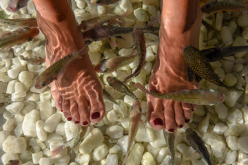 Fish spa feet pedicure skin care treatment at Bangkok
