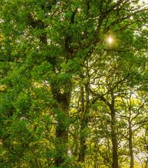 Sunlight between the trees