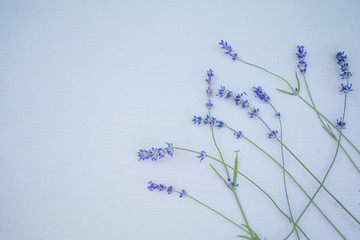 Fresh lavender flowers on blue wood table background free space