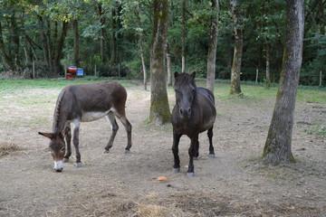 Saint-Herblain - Poney et âne
