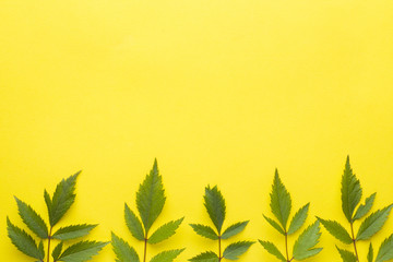 Green leaves on yellow background. Summer concept. Flat position, top view, copy space