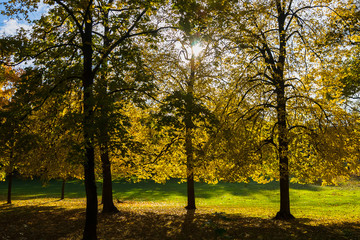 Several Trees in Autumn Colors Backlit by the Sun