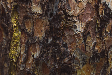 Wood Pattern Trunk Texture Bark