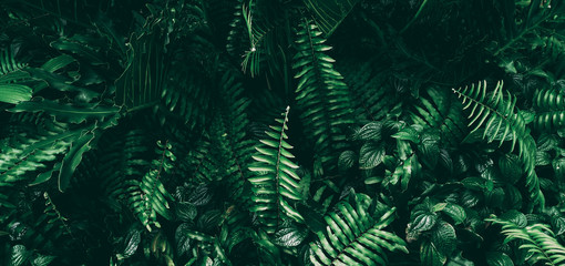 Tropical green leaf in dark tone. Fotoväggar