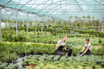 Fototapeta Young couple of workers in uniform taking care of plants at the greenhouse of the plant shop obraz