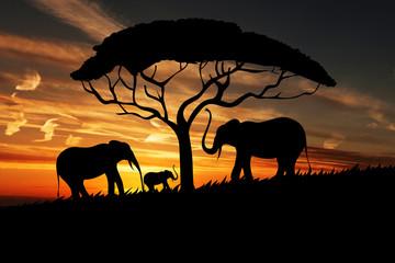 Beautiful Sunset Nature & Elephants | Tree