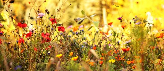 Wildblumenwiese im Spätsommer Fotoväggar
