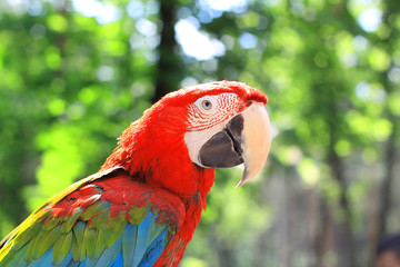 close up. macaw parrot on blurred background of the jungle