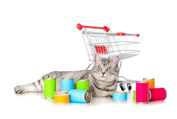 Getigerte Katze mit Katzenfutter und Einkaufswagen