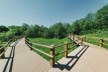 wooden footpath boardwalk in the bog swamp area