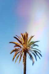 Low angle view of palm tree growing against blue sky during sunny day