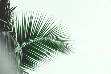 Palm leaves silhouette against sky. Creative minimalism. Copy space for text