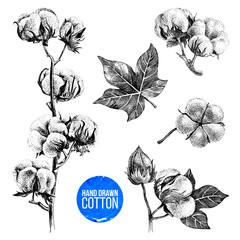 Hand drawn set of cotton