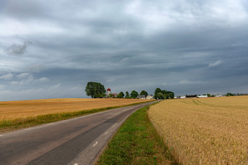 Swedish pastoral landscape. Small road between yellow wheat fields leading to a cosy Sweden village under overcast north sky. A Stock photo.