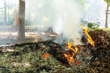 Smoke Developing from Burning Leaves.