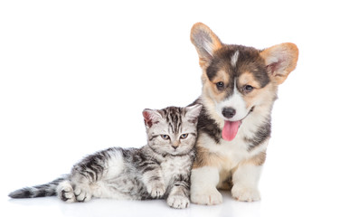 Corgi puppy with scottish tabby kitten together. isolated on white background