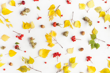 Autumn pattern made of birch tree leaves, rowan berries, hazelnuts on white background. Autumn, fall concept. Flat lay, top view