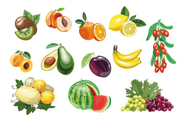 South andTropical fruits elements. Vector isolated elements on the white background.