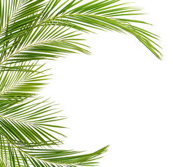 Green palm branches in arch shape frame