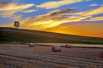 Sunset over summer fields