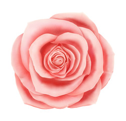 Vector beautiful pink rose floral decorative element. Photo realistic flower icon isolated on white background