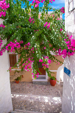 Street view of Ano Syros with colorful boukamvillia tree and traditional houses in Syros island, Greece