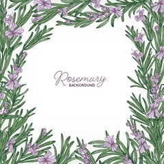 Square backdrop with frame made of rosemary and place for text. Elegant border consisted of gorgeous fragrant wild blooming herb or herbaceous plant. Colorful natural realistic vector illustration.