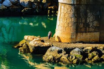 Bird in front of green water under