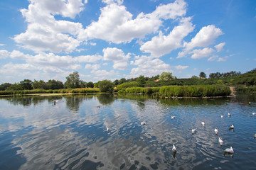 Summer fishing lake scene. Beautiful rural English countryside landscape scene.