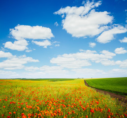 Wall Mural - Captivating scene of the countryside with white fluffy clouds.