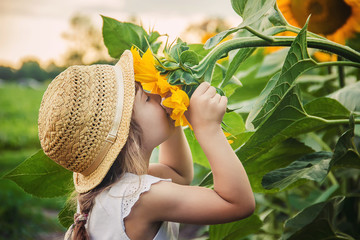 child in the field of sunflowers is a small farmer. selective focus.