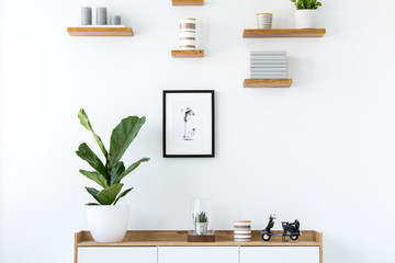 Plant on wooden cupboard in minimal flat interior with poster and shelves on white wall. Real photo