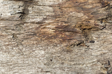 Old Wooden Texture In The Forest.